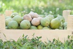 Nueces frescas en un rectángulo, fondo natural fotografía de archivo