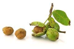 Nueces frescas (juglans regia) con un shell abierto Fotos de archivo