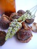 Nueces naturales del jabón con lavanda y la botella Foto de archivo libre de regalías