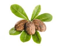 Nueces y hojas del mandingo Foto de archivo libre de regalías