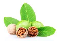 Nueces y hojas verdes Fotos de archivo