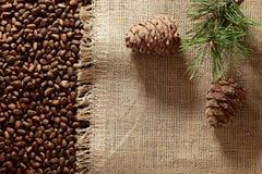Nueces y ramas siberianas de pino Foto de archivo libre de regalías