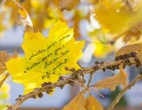 Nuestro amor crece el poema Imagen de archivo libre de regalías