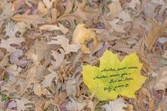 Nuestro amor crece el poema Foto de archivo