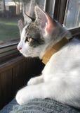 Nuestro gato manchado imagenes de archivo