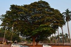 Nuestro viaje a la India al estado de Goa Fotografía de archivo libre de regalías