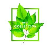 Nueva colección de la primavera Imagen de archivo