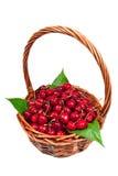 Nueva cosecha de la cereza Imágenes de archivo libres de regalías