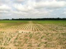 Nueva cosecha de la granja de la primavera foto de archivo