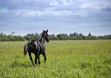 Nueva estación para el caballo Fotografía de archivo libre de regalías