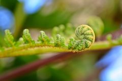 Nueva fronda verde del helecho Imagenes de archivo