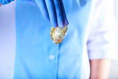 Nueva goma que azucara de oro clara en la mano en un guante azul del látex imágenes de archivo libres de regalías