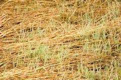 Nueva hierba Foto de archivo libre de regalías