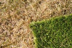 Nueva hierba Fotografía de archivo libre de regalías