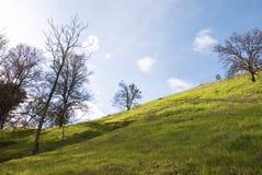 Nueva ladera verde en resorte fotografía de archivo libre de regalías