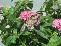 Nueva mariposa fotografía de archivo