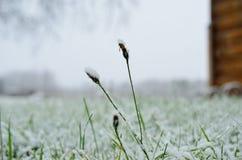 Nueva nieve en hierba y la planta en último otoño Fotos de archivo libres de regalías