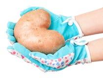 Nueva patata Fotografía de archivo