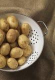 Nueva patata Foto de archivo libre de regalías