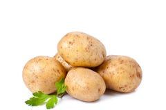Nueva patata y perejil verde Fotografía de archivo libre de regalías