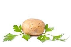 Nueva patata y perejil verde Fotos de archivo libres de regalías