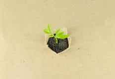 Nueva planta Foto de archivo libre de regalías