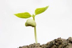 Nueva planta de semillero Imagen de archivo