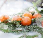 Nueva tarjeta con las mandarinas adornadas como juguetes del abeto Foto de archivo