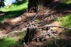 Nueva vida - brote en el bosque Imagen de archivo