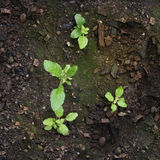 Nueva vida de verduras crecientes de las semillas y del musgo Fotos de archivo