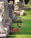 Nueva vida entre las tumbas Fotos de archivo libres de regalías