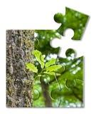 Nueva vida: la primavera está viniendo - pequeña planta llevada de un tronco de árbol stock de ilustración