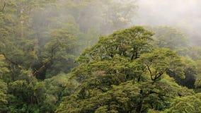 Nueva Zelanda 2015 Fotos de archivo