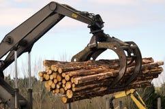 Nueva Zelanda Forest Products Fotografía de archivo libre de regalías