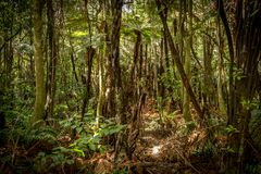 Nueva Zelandia arbusto imágenes de archivo libres de regalías