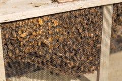 Nuevas abejas Imágenes de archivo libres de regalías