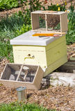 Nuevas abejas Fotos de archivo libres de regalías