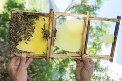 nuevas abejas de la armadura del panal Fotos de archivo libres de regalías
