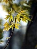 Nuevas hojas Imagen de archivo