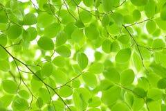 Nuevas hojas Foto de archivo libre de regalías