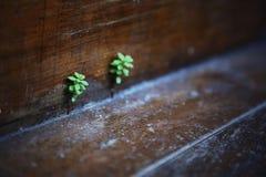 Nuevas hojas del piso Imagenes de archivo