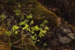 Nuevas hojas en primavera Imágenes de archivo libres de regalías