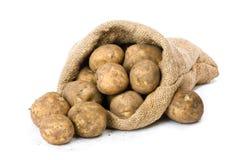 Nuevas patatas Imagen de archivo libre de regalías