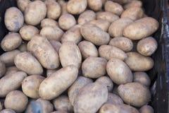 Nuevas patatas frescas Fotografía de archivo