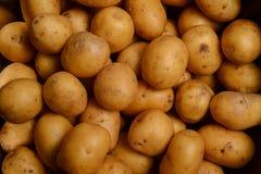 Nuevas patatas Patata-grandes Imágenes de archivo libres de regalías