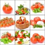 Nueve cuadros de tomates Fotografía de archivo libre de regalías