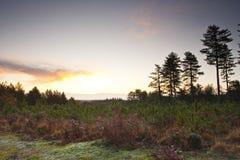 Nuevo amanecer de Forset Foto de archivo libre de regalías