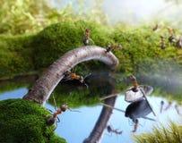 Nuevo barquero del puente y del scrounger, cuentos de la hormiga Fotografía de archivo libre de regalías