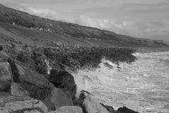 Nuevo bosque de la playa Fotos de archivo
