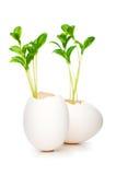 Nuevo concepto de la vida con la planta de semillero y el huevo Fotografía de archivo libre de regalías